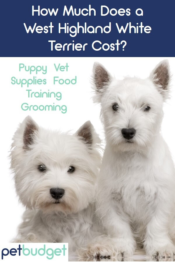 A Westie Puppy And Dog